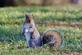 """A squirrel looks amazed and looks like he/she is saying, """"Really?"""". Taken November 26, 2020 Eagle Point park, Dubuque, IA by Veronica McAvoy."""