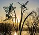 Dragonfly Sculpture is silhouetted by the morning sun. Taken November 21, 2020 Riverwalk, Dubuque by Deanna Tomkins.