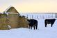 Cows stand around the remains of a stone structure at a farm along Old Massey Road. Taken in February outside of Dubuque by Lorlee Servin.
