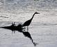 Great Blue Heron early morning silhouette- fishing. Taken September 17, 2016 Dubuque Riverwalk by Deanna Tomkins.