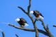 Eagles. Taken 2/27/21 An Eagle's Nest near the landfill by Stephanie Beck.