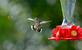 """I've got a bigger stinger than you do!"" the hummingbird said to the wasp. Taken August 16, 2016 Backyard by Deanna Tomkins."