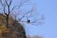 A bald eagle perches in a tree above the bluffs and looks out over the river.. Taken November 10, 2017 Lock and Dam 11, Dubuque, IA by Veronica McAvoy.