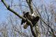 American bald eagle perches in a tree to get a good view. Taken March 10, 2017 Dubuque county, Iowa by Veronica McAvoy.