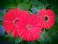 Flower. Taken Summer Dubuque by Dave Lynn.