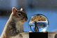 A squirrel encounters a crystal ball . Taken  on a sunny winter afternoon at a bird feeder in Dubuque by Gary Hillard.