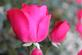 A rose by any other name.... Taken October 16, 2017 Locust street, Dubuque, IA by Veronica McAvoy.