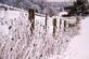Frosty Fence Line. Taken 3/1/15 Swiss Valley Road by Lori.
