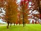 Fall colors fill the trees. Taken October 19 In Galena  by Lorlee Servin.