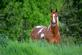 A horse stands in a field. Taken in June in East Dubuque by Lorlee Servin.
