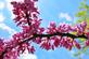 Blossoms on my neighbor's tree. Taken May 2 here in Dubuque by Lorlee Servin.