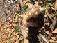 Fall fungas. Taken 10-19-2017 Asbury park by Kimberly Jo Wulfekuhle.
