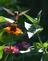 A hummingbird dances. Taken in September at the butterfly garden in Bellevue by Lorlee Servin.