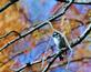 A male downy woodpecker rests on a tree branch.. Taken October 30, 2020 Swiss Valley nature center, Dubuque co., IA by Veronica McAvoy.