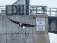 An eagle fishes in a restricted area near dam.. Taken February 28, 2021 Lock and Dam No. 11, Dubuque by Deanna Tomkins.
