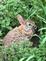 Rabbit. Taken May 12,2016 My Garden by Myself.