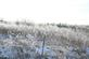 Frozen trees and fields. Taken 02/25/2017 Olde Davenport Road by Thomas Lippstock.