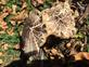 Fall fungus. Taken 10-19-2017 Asbury park by Kimberly Jo Wulfekuhle.