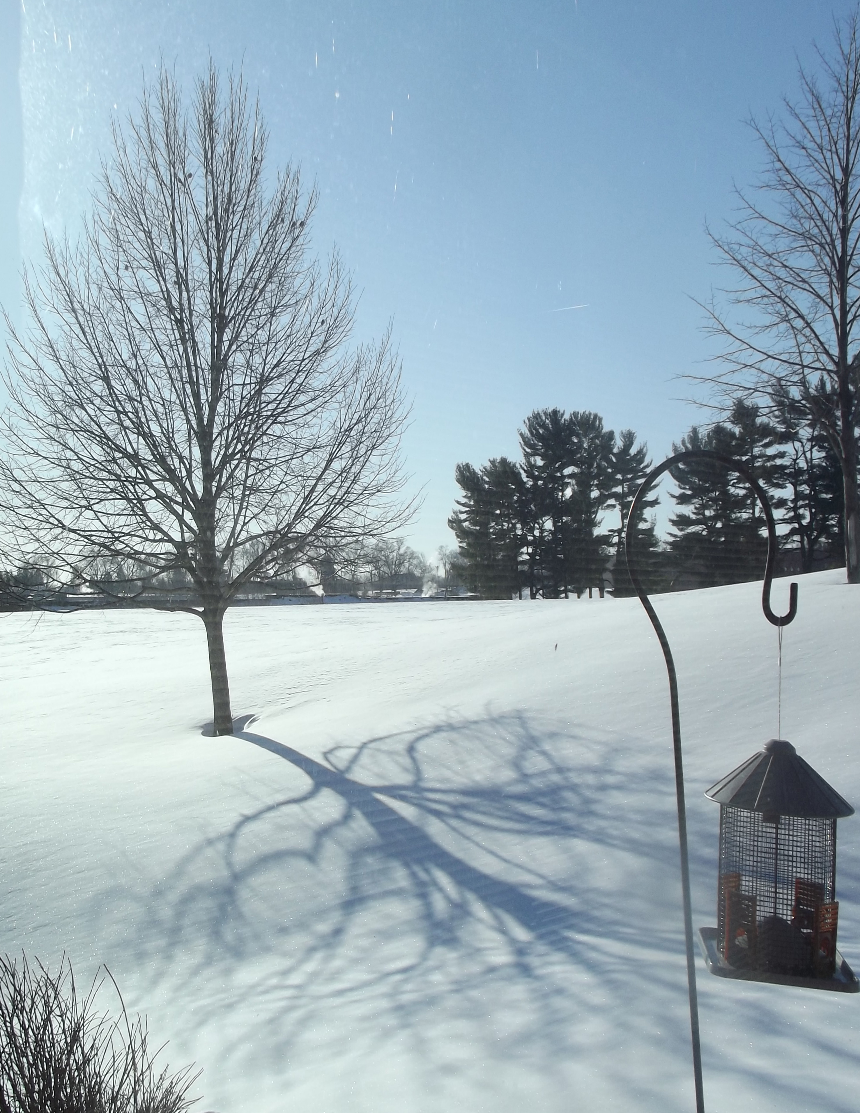 winter shadow. Taken 3/3/2014 my backyard by me.