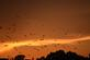 A flock of birds is silhouetted by the sunset. Taken June 22 near the river walk in Dubuque by Lorlee Servin.