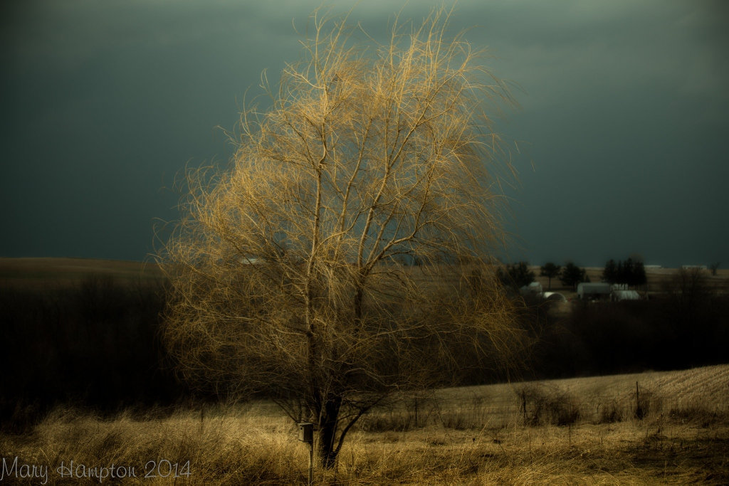 Wind Swept Willow. Taken April 13,2014 Lancaster WI by Mary Hampton.