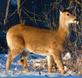 A cold day for a deer to be looking for food.. Taken 2-18-21 Dubuque area             by Peggy Driscoll           .