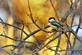 A chickadee hangs on on a windy day. Taken Feb. 12 in Dubuque by Lorlee Servin.