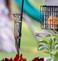Chipmunk climbs pole to get a better look at a bird feeder. Taken May 12, 2017 Backyard by Deanna Tomkins.