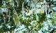 Icicles form on a fir tree.. Taken November 17, 2018 Hurtsville Interpretive Center, Maquoketa, IA by Veronica McAvoy.
