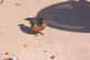 """Robin chirps at photographer. """"Get out of my way!"""". Taken March 19, 2017 Iowa street, Dubuque, IA by Veronica McAvoy."""
