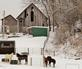 A country barn with horses.. Taken January 30, 2021 East Dubuque, ILL by Veronica McAvoy.