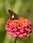 Summer beauty hangs on. Taken in September at the butterfly garden in Bellevue by Lorlee Servin.