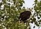 Eagles' perch high in the treetops.. Taken September 23, 2019 Iowa side of the Mississippi river, Wisconsin by Veronica McAvoy.