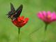 Beauty in the butterfly garden. Taken August 18 Bellevue State Park by Lorlee Servin.