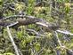 Snake. Taken May 4th Backwaters Mississippi river by Abe/Louie Osterberger.