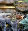 Robin splashes around in a pond waterfall. Taken October 9, 2016 Dubuque Arboretum  by Deanna Tomkins.