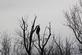 A lone eagle sits high in a tree near a lake.. Taken February 17, 2017 O' Leary's Lake by Veronica McAvoy.