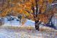The first snowfall of the season. Taken in November in Dubuque by Lorlee Servin.