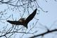 Eagle flies off in search of another perch.. Taken March 1, 2017 O' Leary's Lake by Veronica McAvoy.